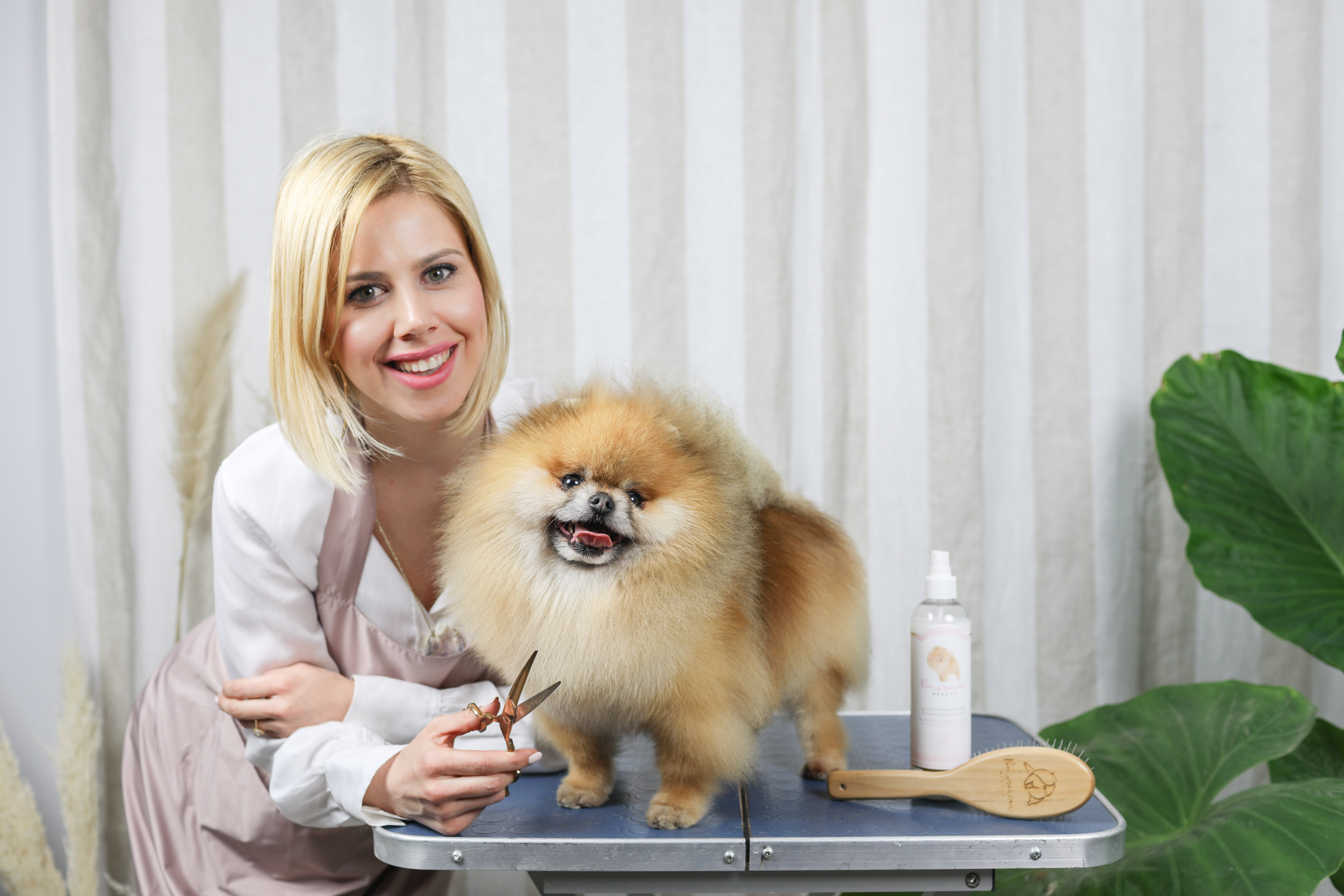 Tutorial Video! Pomeranian Grooming - How to Cut Pomeranian Hair